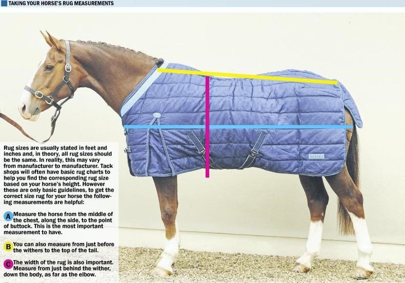 HORSE SENSE: A guide to rugs inside and
